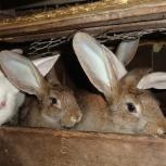 меняю крола на кролиху, Тюмень