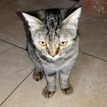 Срочно! Рыжий кот и трехшёрстная кошечка ищут новый дом!, Тюмень