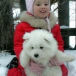 Белоснежный и очень роскошный щенок, Тюмень