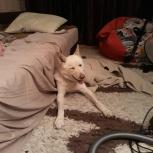 Найден пес, Тюмень