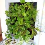Фитокартина из живых растений, Тюмень