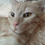 Котенок Тиша срочно ищет дом, Тюмень