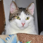 Молодой котик Космос - необъятная вселенная, Тюмень