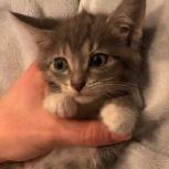 Возьмите друга котика!, Тюмень