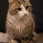 Шикарный кот, Тюмень