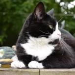 Очаровательный котик Тоша ищет семью, Тюмень