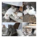 Милые котята ждут своих хозяев, Тюмень