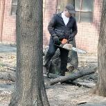 Спил деревьев, Тюмень