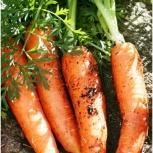 Морковь, Тюмень