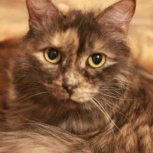 Кошечка Фея - волшебница ищет семью, Тюмень