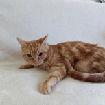 Котята 8-мь месяцев, Тюмень