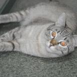 Молодой котик рэмси, Тюмень