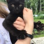 Котенок ищет дом, Тюмень