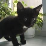 Отдам котёнка 2 месяца мальчик, Тюмень