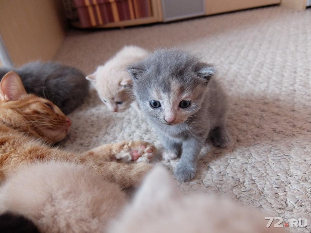 произведении фото котят в три недели небольшой район переживает